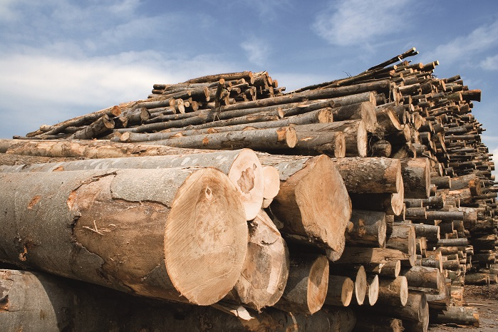 The demand is high for wood-based cellulose fibres. © Lenzing AG