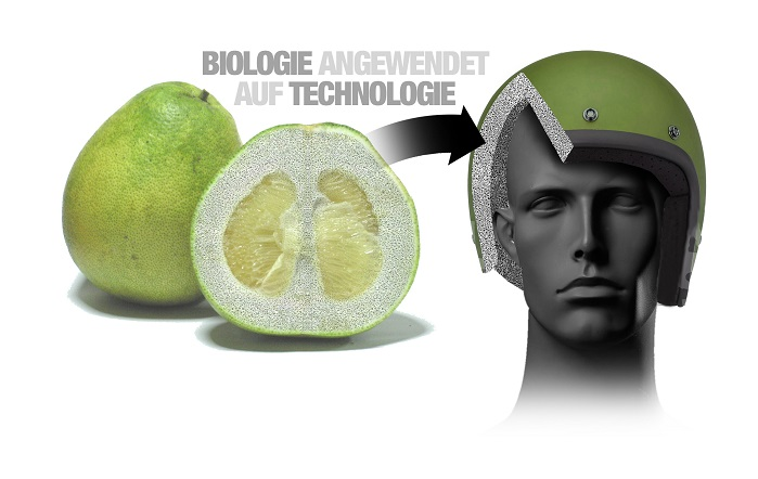Biological models which inspired the programme include the pomelo fruit. © BMW Group