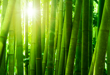 Key garments manufacturers started developing environmental-friendly products, such as bamboo fibres.