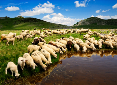 The International Wool Textile Organisation will look at how the industry can protect wool's environmental credentials.